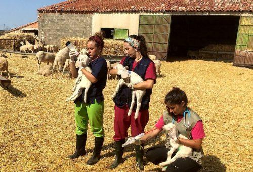 La DPZ y la Universidad de Zaragoza ponen en marcha la II edición de Desafío, su programa de prácticas en el medio rural zaragozano